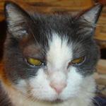 cat_cooky_otj