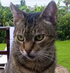cat_einstein_otj
