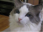cat_justin_otj