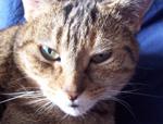 cat_patch_otj