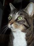 cat_thor_otj